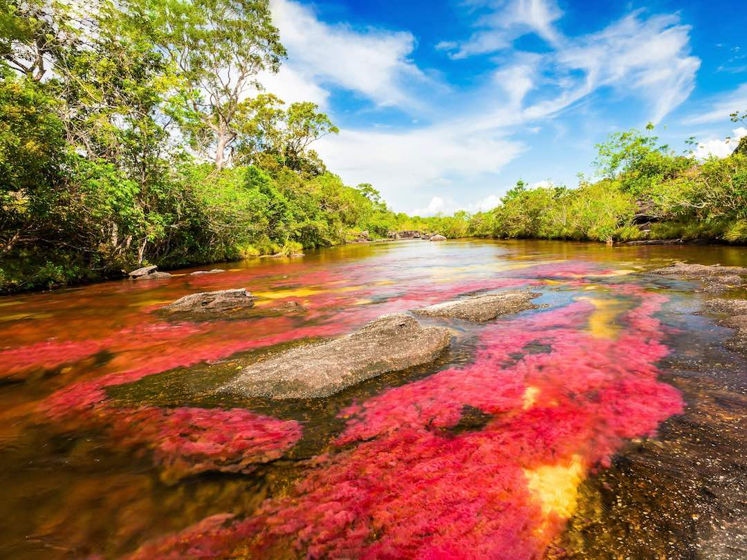 Awesome nature in the Amazon Colombia