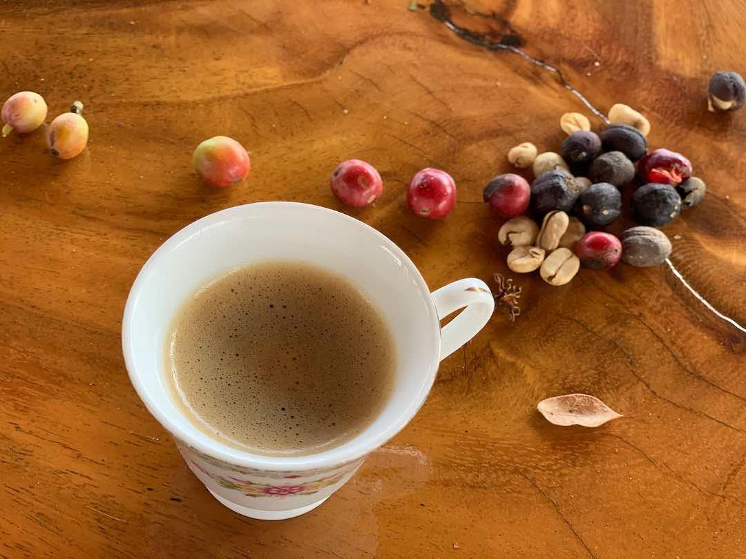 Coffee beans fresh form coffee region Colombia