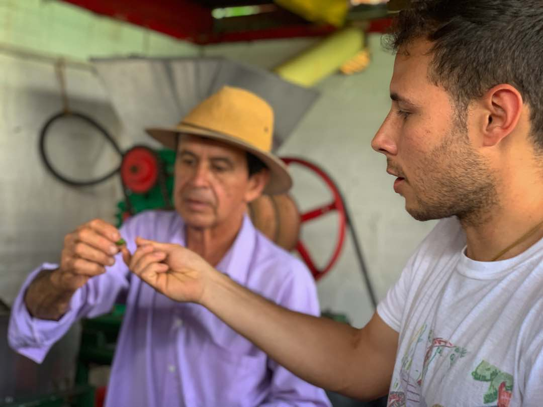 Examining coffee beans with Colombian coffee farmer