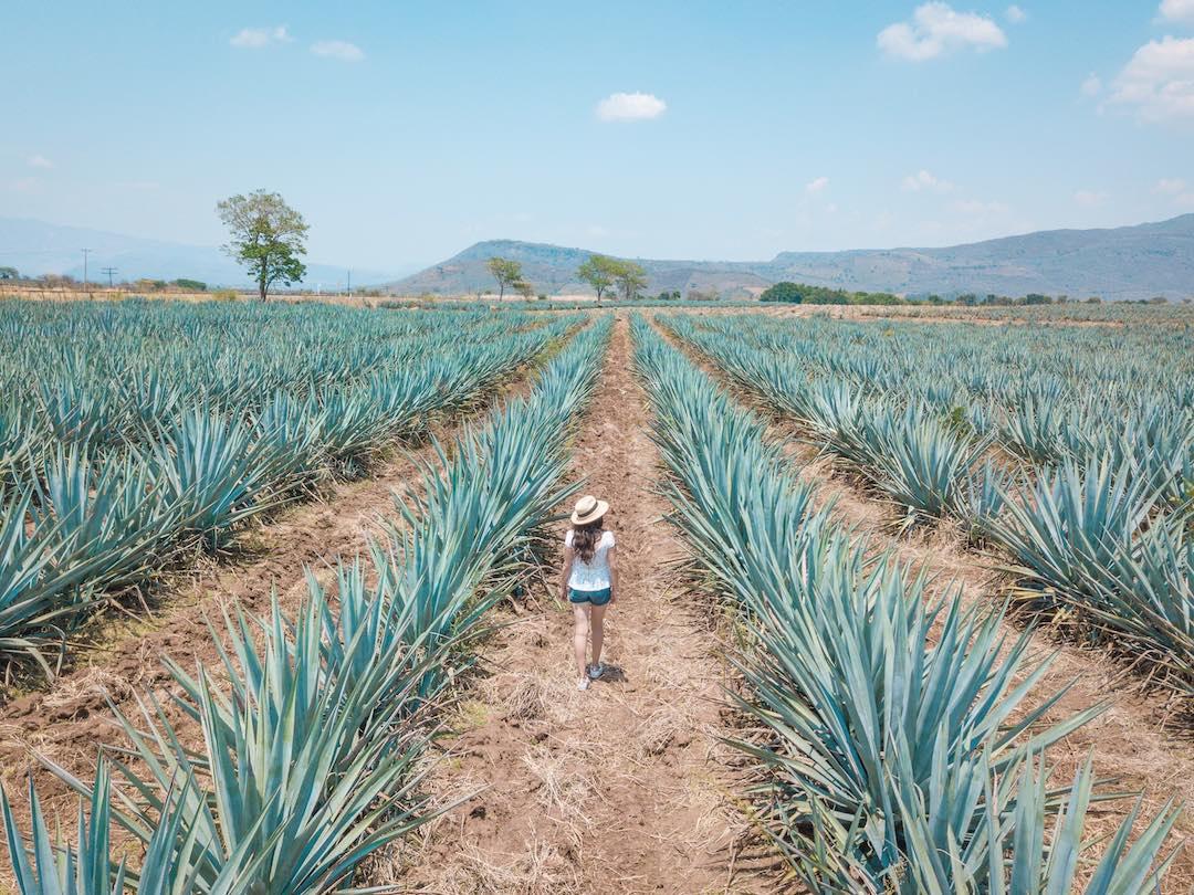 Visiting a Mezcal farm during our Mexico group tour