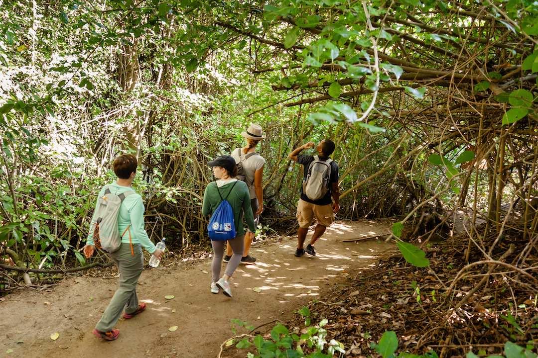 hiking the jungle of tayrona national park