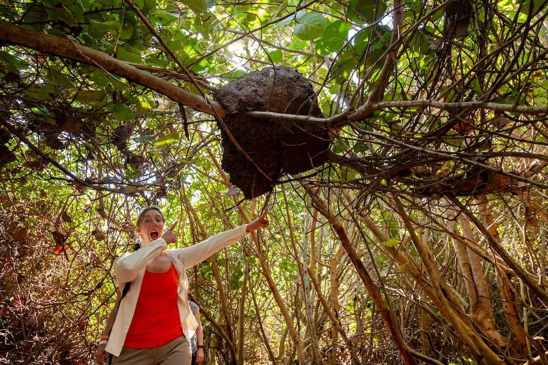 termite nest in parque tayrona colombia