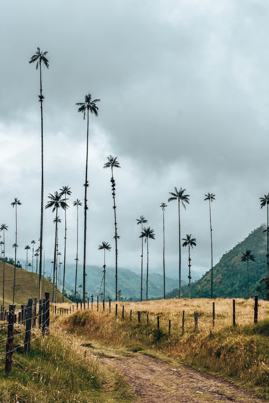 colombian adventure travel hiking the cocora valley
