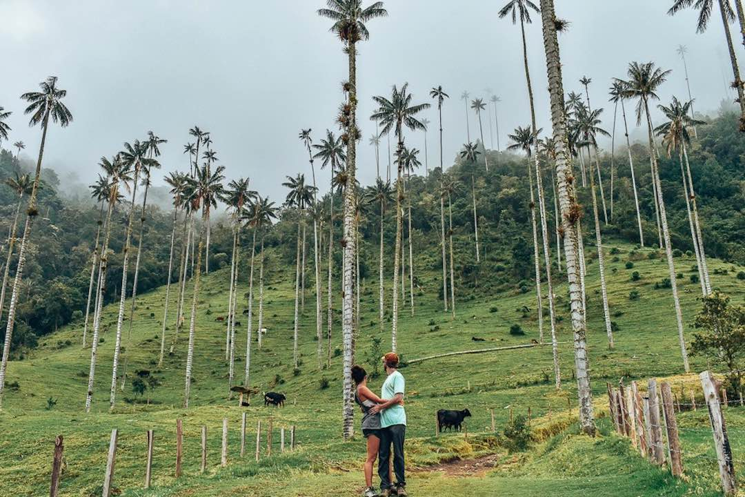 interesting things about colombia: world's tallest palm trees
