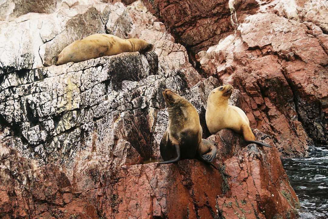 Solo travel to Peru Paracas Natural Reserve